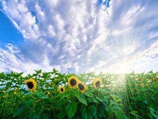 Afaceri de top in agricultura - cele mai profitabile 17 afaceri la cheie agricole