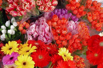 Folosirea plantelor ca flori taiate