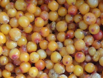 Congelarea sau uscarea fructelor de catina