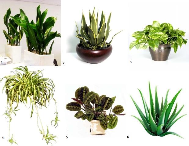 Cele mai usor de ingrijit plante de apartament