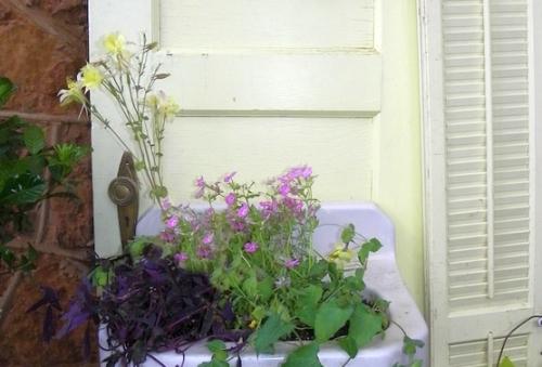O chiuveta veche devine jardiniera