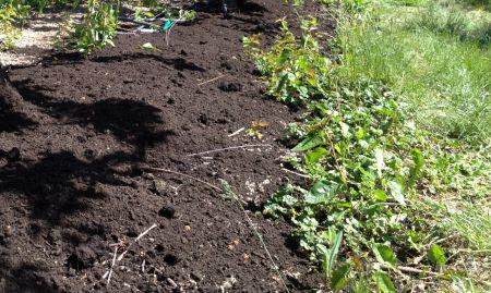 Cand si cum se foloseste compostul in gradina