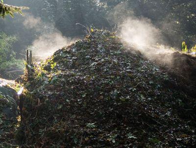 Pune gunoiul la treaba! Gramada de compost cu resturi din bucatarie
