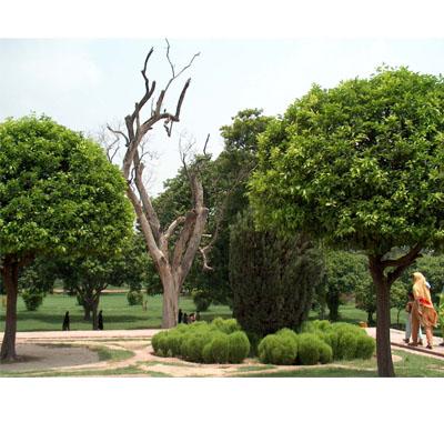 Cum poti afla daca pomii din curte sunt un pericol - Trunchiul Copacului