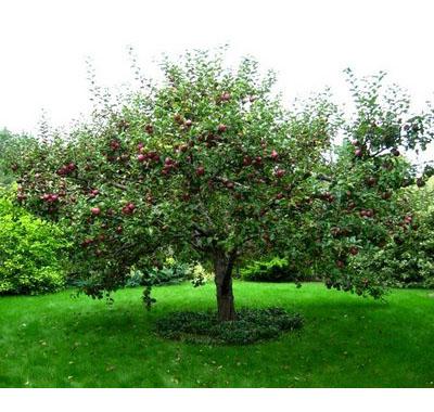 Cum poti afla daca pomii din curte sunt un pericol - Varsta Copacului