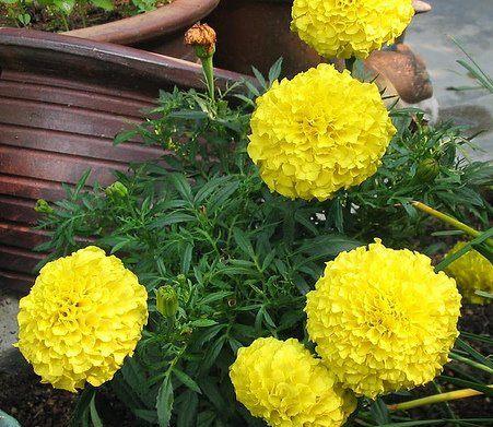 Craitele, flori pentru orice gradina