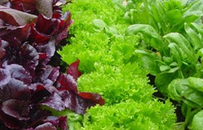 Salata se seamana in luna septembrie
