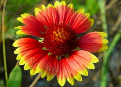 Top cinci flori portocalii pentru sarbatorile de iarna