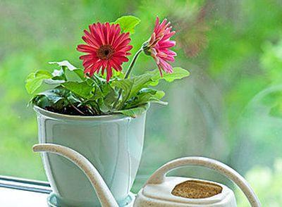 Ce ghiveci alegi pentru plantele de interior