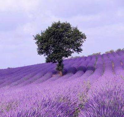 Scapa de stres prin aromaterapie