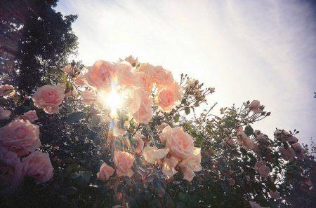 Influenta luminii asupra plantelor decorative