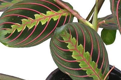 10 Articole Infocasasigradinaro Despre Plante Decorative