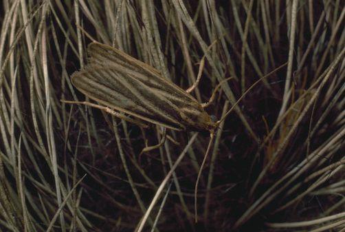 Cum ne aparam blanurile de molii