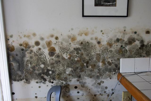 Scapa de mucegaiul de pe pereti cu otet si bicarbonat de sodiu