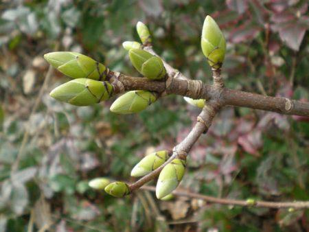 Scurta descriere a organelor aeriene ale pomilor fructiferi