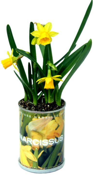 O noua moda: plantele la conserva