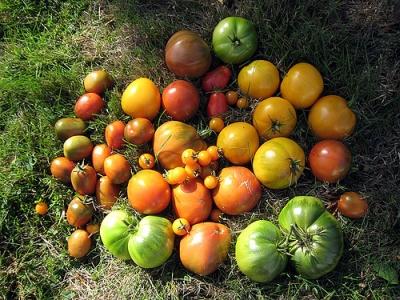 Luna octombrie in gradina de legume