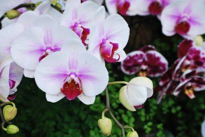 Orhideele si umiditatea
