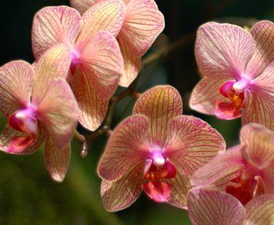 8 stafuri pentru ingrijirea corecta a orhideelor