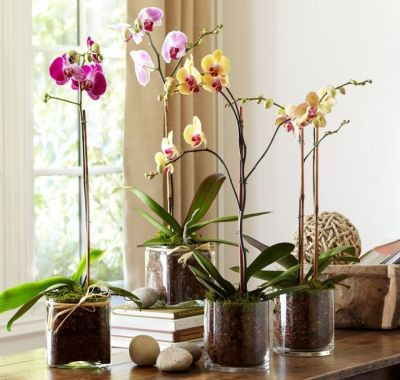 Orhideele, cele mai vandute flori la ghiveci din Romania