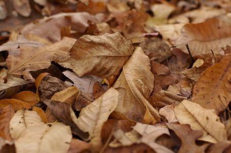 Cum se obtine pamantul de frunze