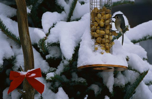 Cum sa atragi pasarile in gradina, iarna