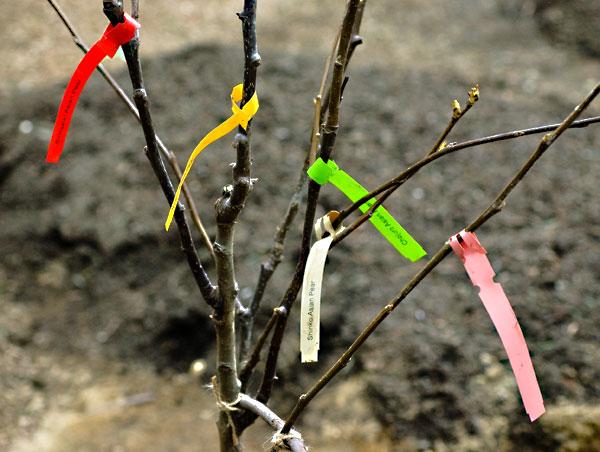 Sfaturi despre plantarea pomilor fructiferi