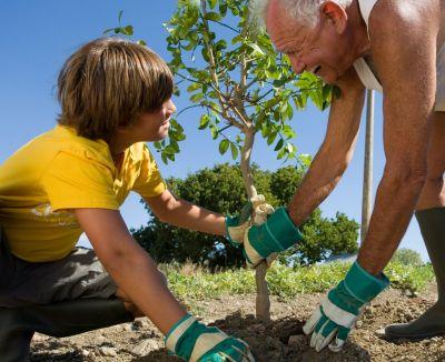 Transplantarea corecta a arborilor si arbustilor de gradina