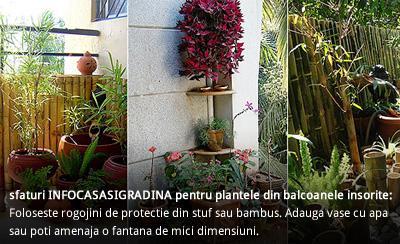 Sfaturi pentru a mentine umiditatea pe balcon, in lunile de vara