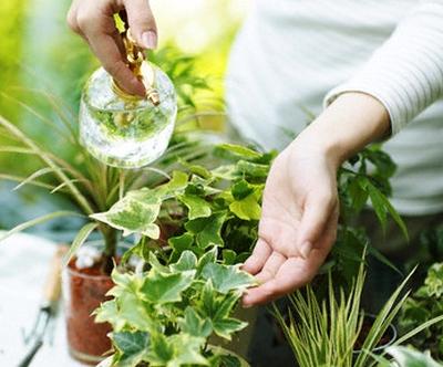 Trucuri care ajuta plantele de apartament sa suporte mai bine canicula
