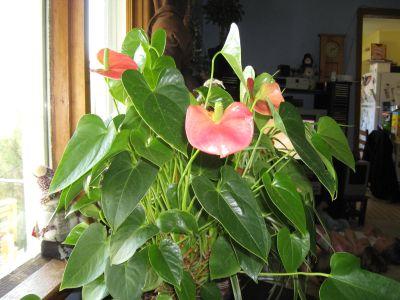 Cum sa alegi plantele tropicale potrivite locuintei tale?