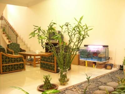 Plante benefice pentru casa