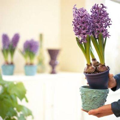 Cum sa cumperi o planta sanatoasa din magazin