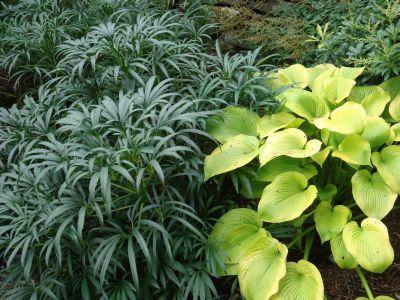 Plante perene care se pot cultiva in semi-umbra