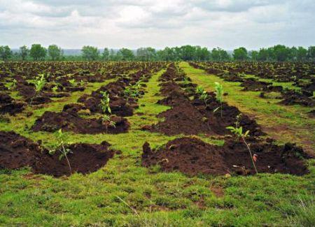 Cum pregatim terenul pentru plantarea puietilor