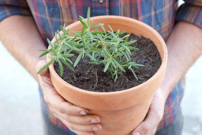 Plante aromatice pe care sa le cultivi in casa