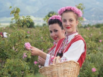 Bulgaria ar putea interzice exportul de butasi de trandafiri