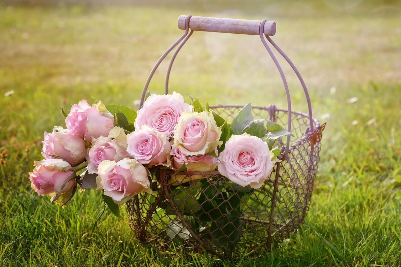 Cum sa ingrijesti trandafirii primavara?
