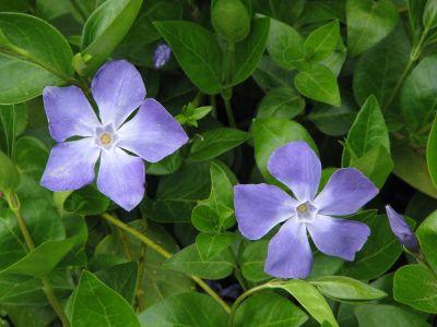 Ce plante si flori se pot planta sub brazi