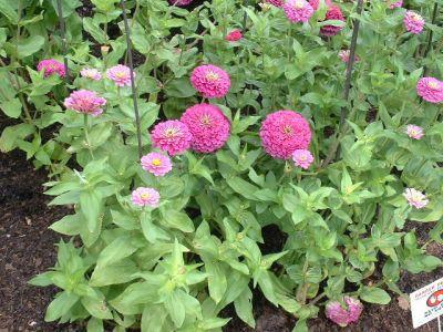 Flori ce se pot planta la sudul casei